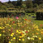 Stunning wildflowers in the walled gardens, Glenarm