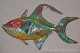 Queen--Trigger-Fish-web-sig