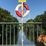 Diezmann Rettungshund