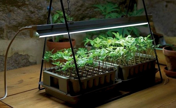 NASA's technology of growing plants Indoor