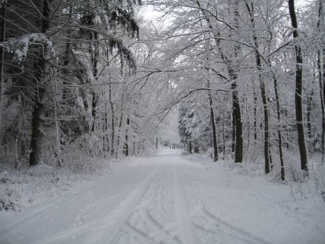 Snowy wood path