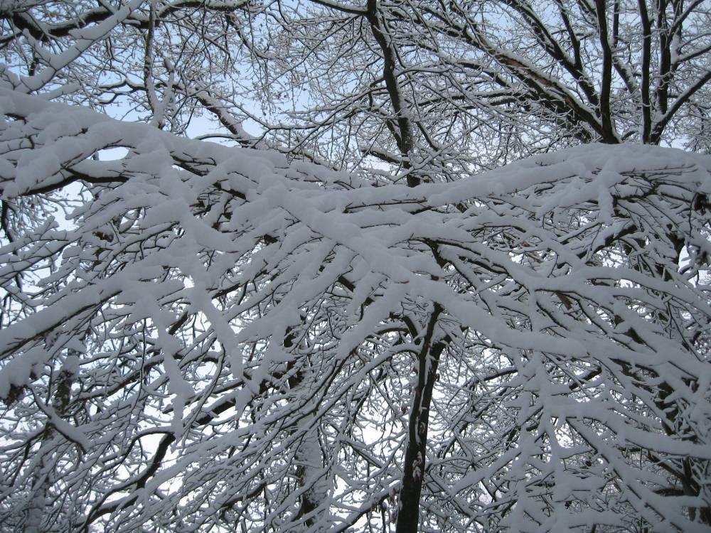 Winter Wonderland (2/6)