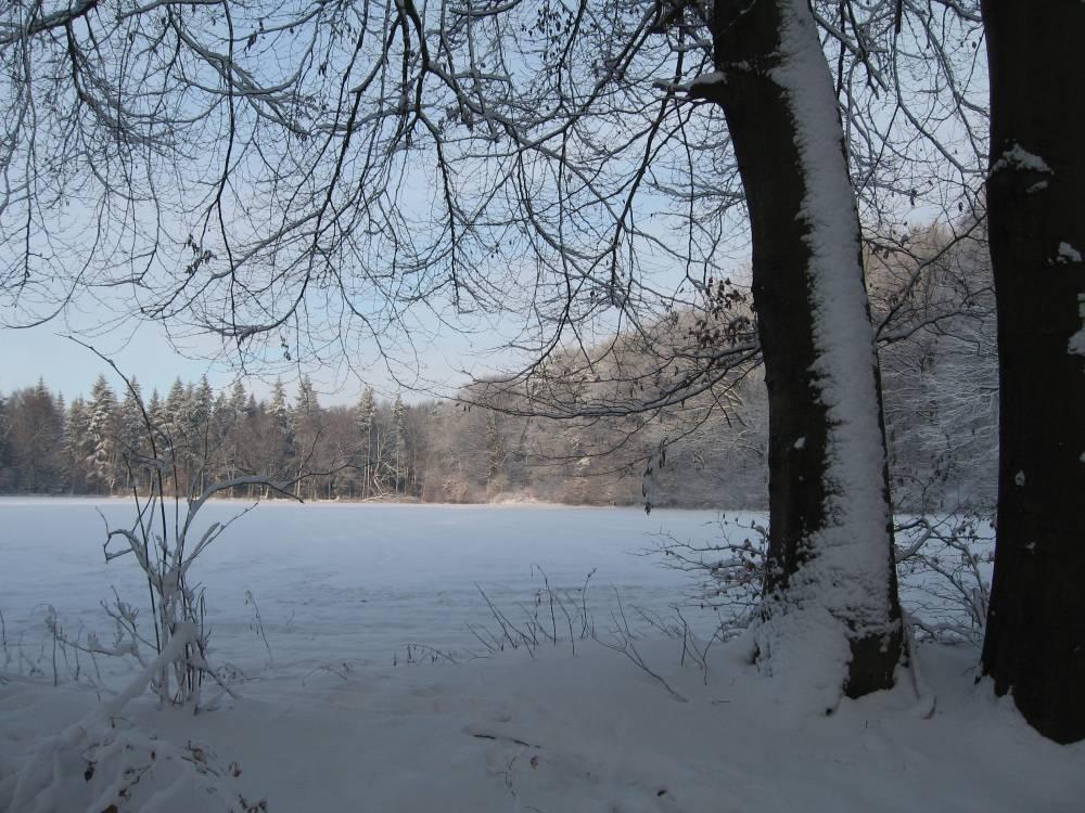 Winter Wonderland (5/6)