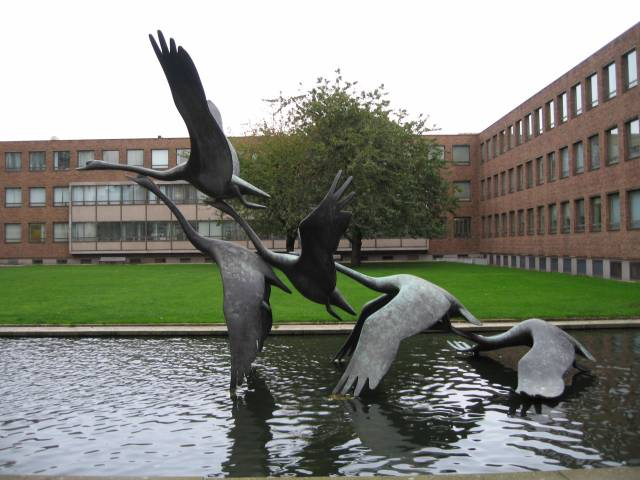 Flying Swans at the Civic Centre