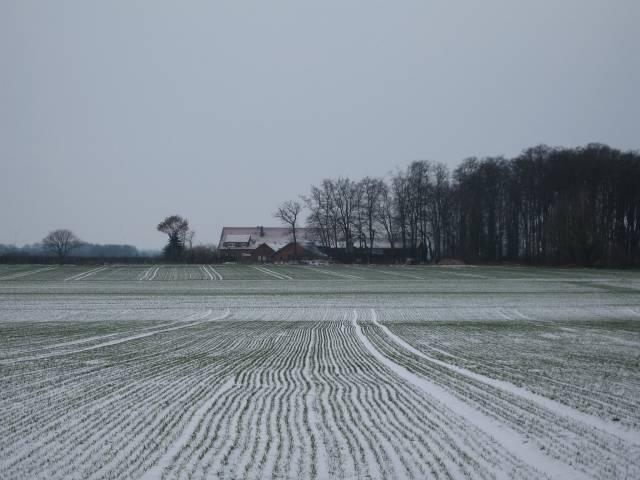 Snowy fields