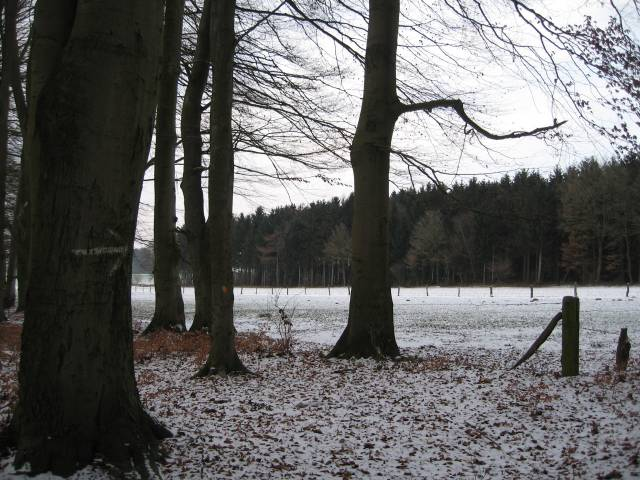 Snowy wood edge