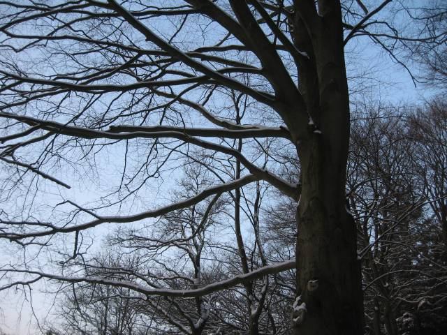 Winter wood branches