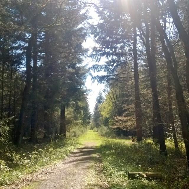Wood path near Kirchhatten