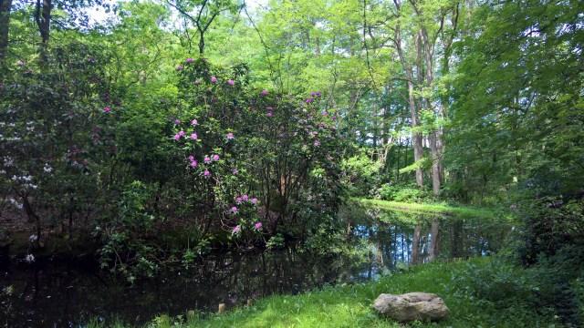 Engelmannsbäke with rhododendron