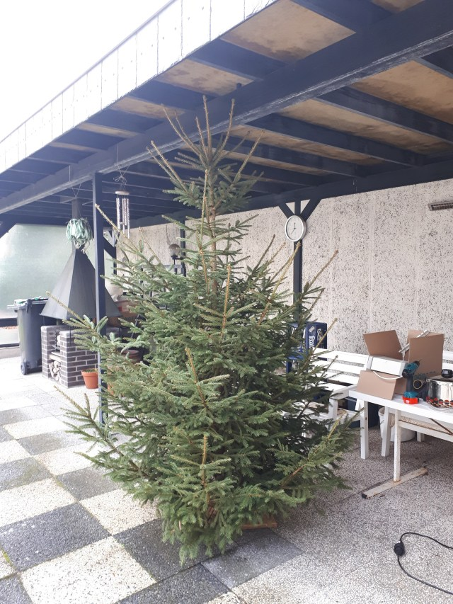 Christmas tree on patio