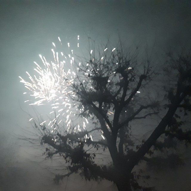 Fireworks and tree