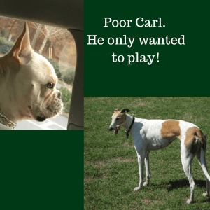 Poor Carl. He only wanted to play!