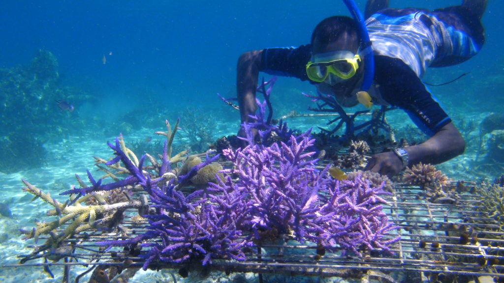 A coral nursery being tended to by a diver