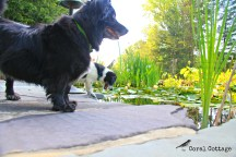 boo and peanut at the pond 1