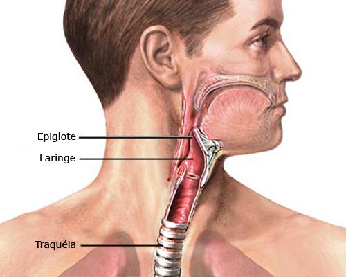 Laringe e Epiglottide