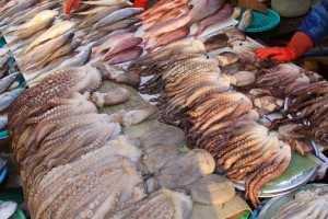 кальмары польза и вред