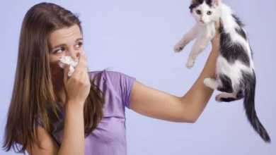 Photo of «У меня аллергия на котов и собак» — правда или отмазка?