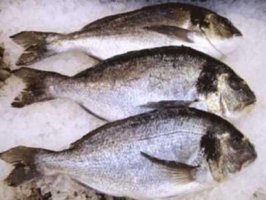 Рыба Дорадо 1