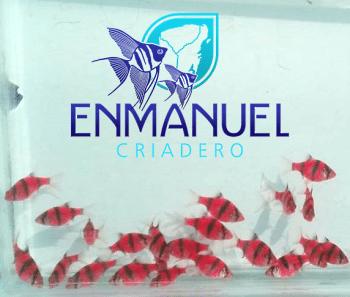 Criadero de peces Enmanuel Yucatán