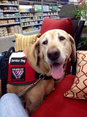 "Jarrett Gimbl's dog wears a harness that says ""Service Dog. Disabled Service Veteran"""