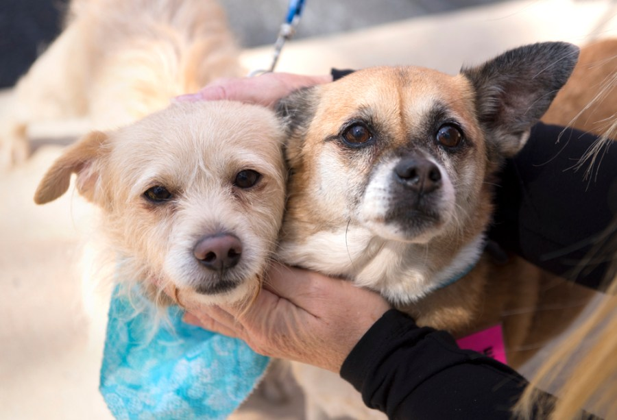 Norman and Bella Rose Need a forever home     - photos by Adam Baron