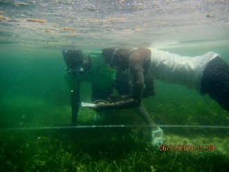 benthic cover monitoring