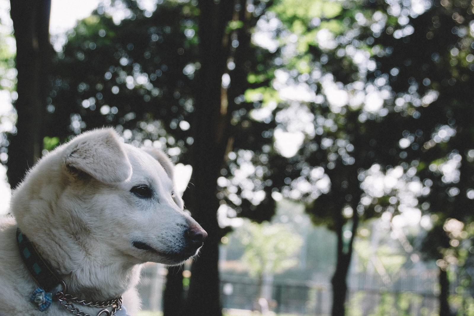 心霊ちょっといい話『心配する愛犬』など短編全10話