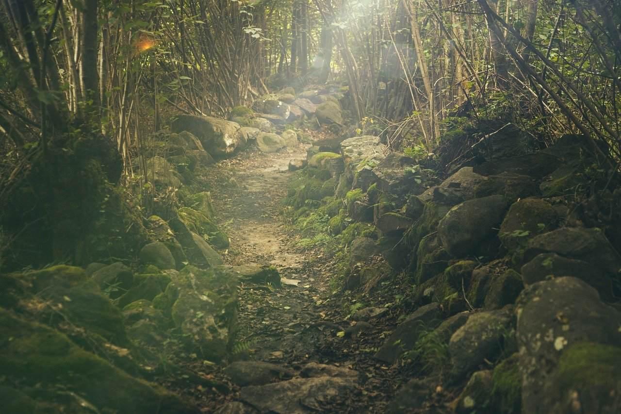 山にまつわる怖い話『龍神岩』|洒落怖・山の怪談