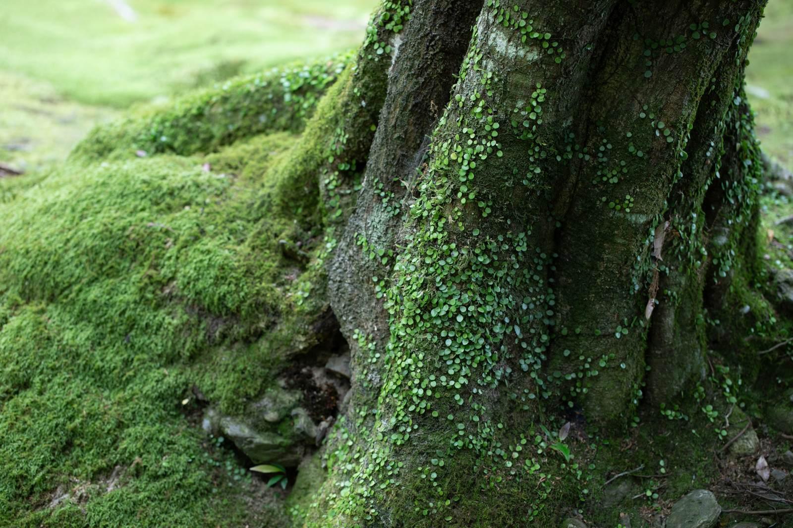 時空にまつわる不思議な体験『木の根もとの穴』など短編全5話