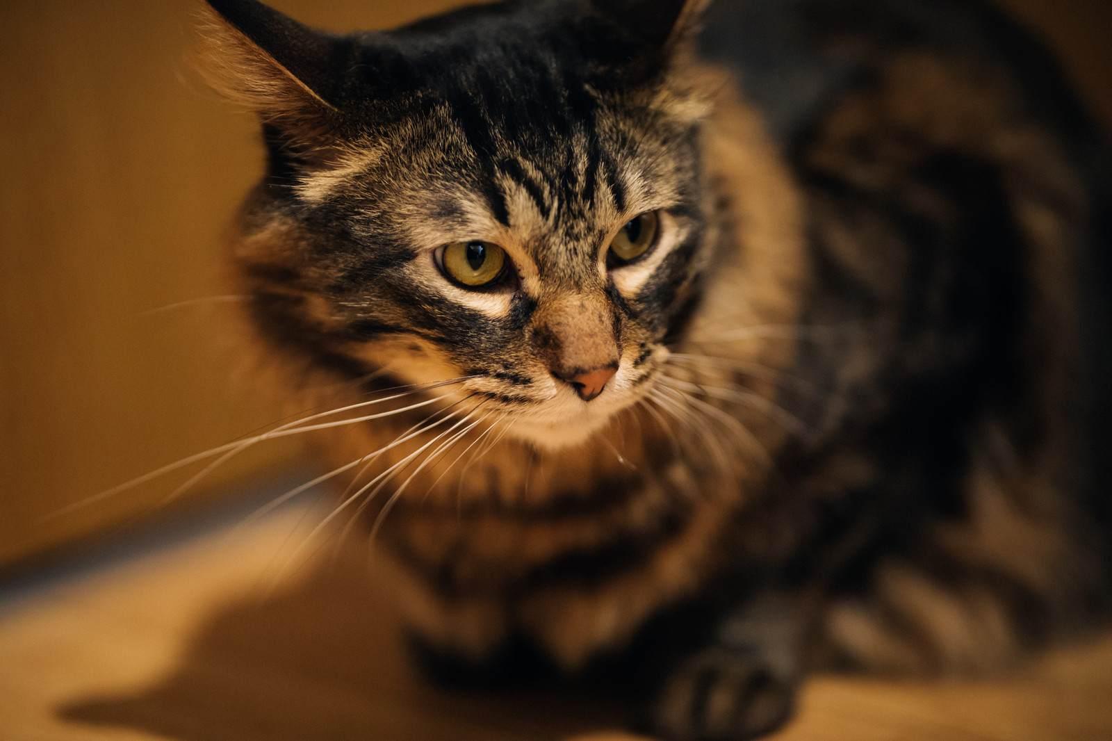 心霊ちょっといい話『お経に聞き入る猫』など短編全10話
