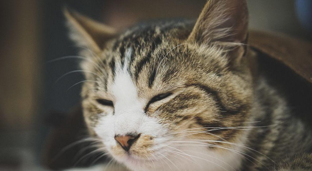 『猫好き婆さん』 - なんか笑える心霊体験