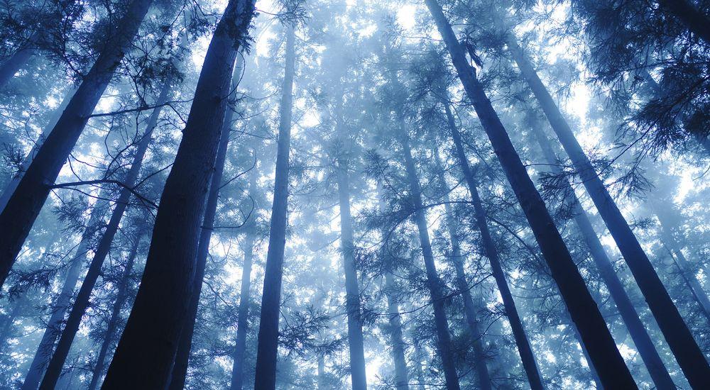 『霧の夜』|神社にまつわる不思議な話・怖い話まとめ