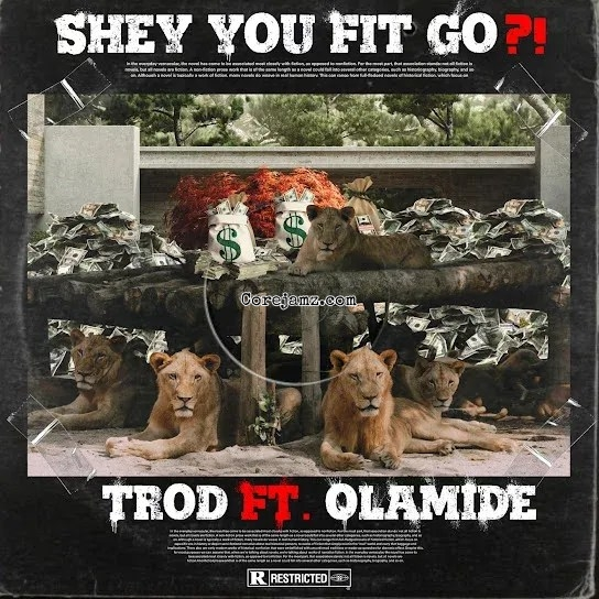 Trod Shey You Fit Go? Mp3 Download