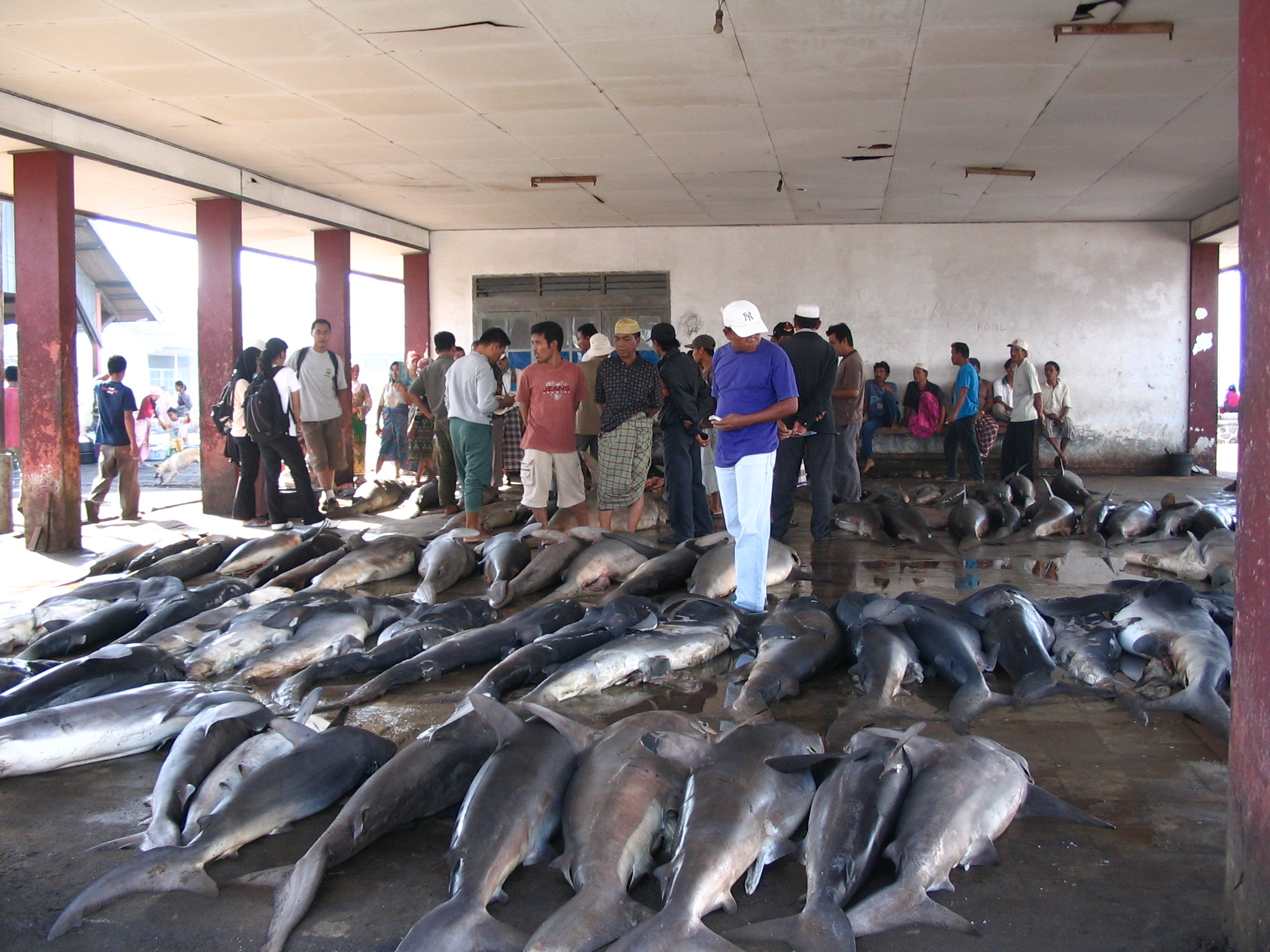 shark market, Indonesia