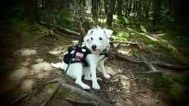 Kasper on the Chocorua trail
