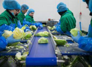 Vizită la fabrica de salate Eisberg