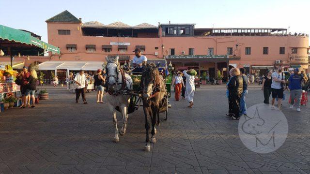 O experiență completă în Jemaa el-Fna – Road Trip în Maroc (ep 1)
