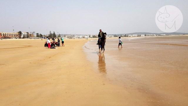 Essaouira: capre, carpete, vânt și plajă imensă (ep 5)