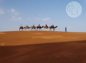 Sahara, experiență cu peripeții – road trip în Maroc (ep 8)
