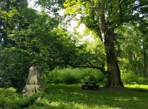 Parcul Dendrologic de la Simeria, unic în România