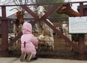 Muzeim prin București: Ferma Animalelor