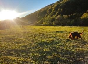 Via Transilvanica are încă 285 km marcați în Mureș și Harghita