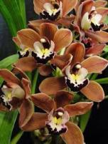 orhidee-24-februarie6