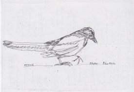 Apr5_ oneliner magpie