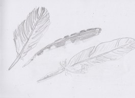 Apr15_graphite drawing of feathers