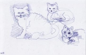 May16_cat sketch #1