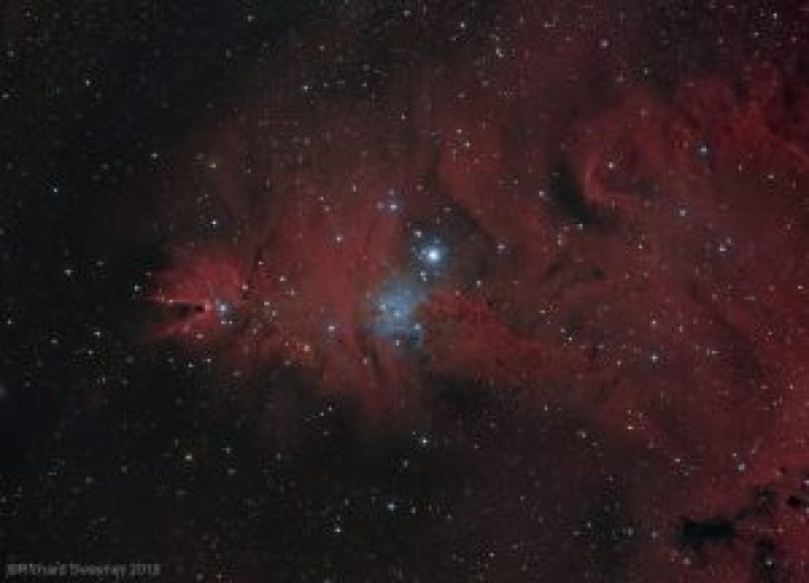 Cone Nebula and Christmas Tree by guest photographer Richard Sweeney