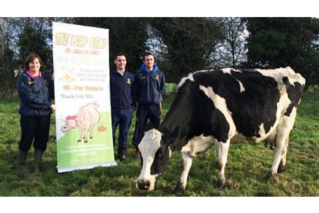 Pop-up banner with cow