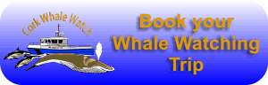 Book whale watching trips in West CorkBook whale watching trips in West Cork