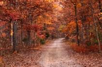 Wildwood in the Fall